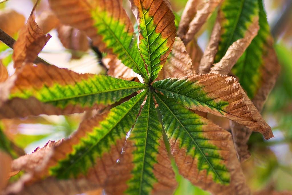 fotografía vegetación otoño El Retiro Madrid