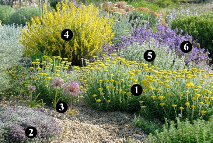 Plantas r sticas y resistentes a la sequ a para un jard n - Nombres de plantas de jardin ...