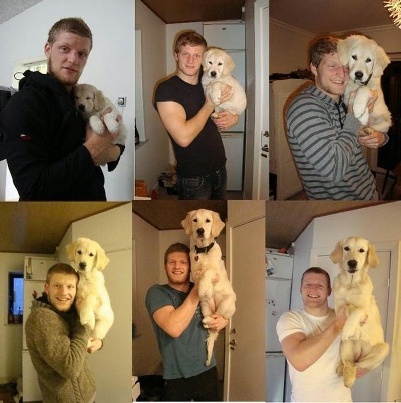 12 amazing before and after photos  | Dogs growing up  with their owners
