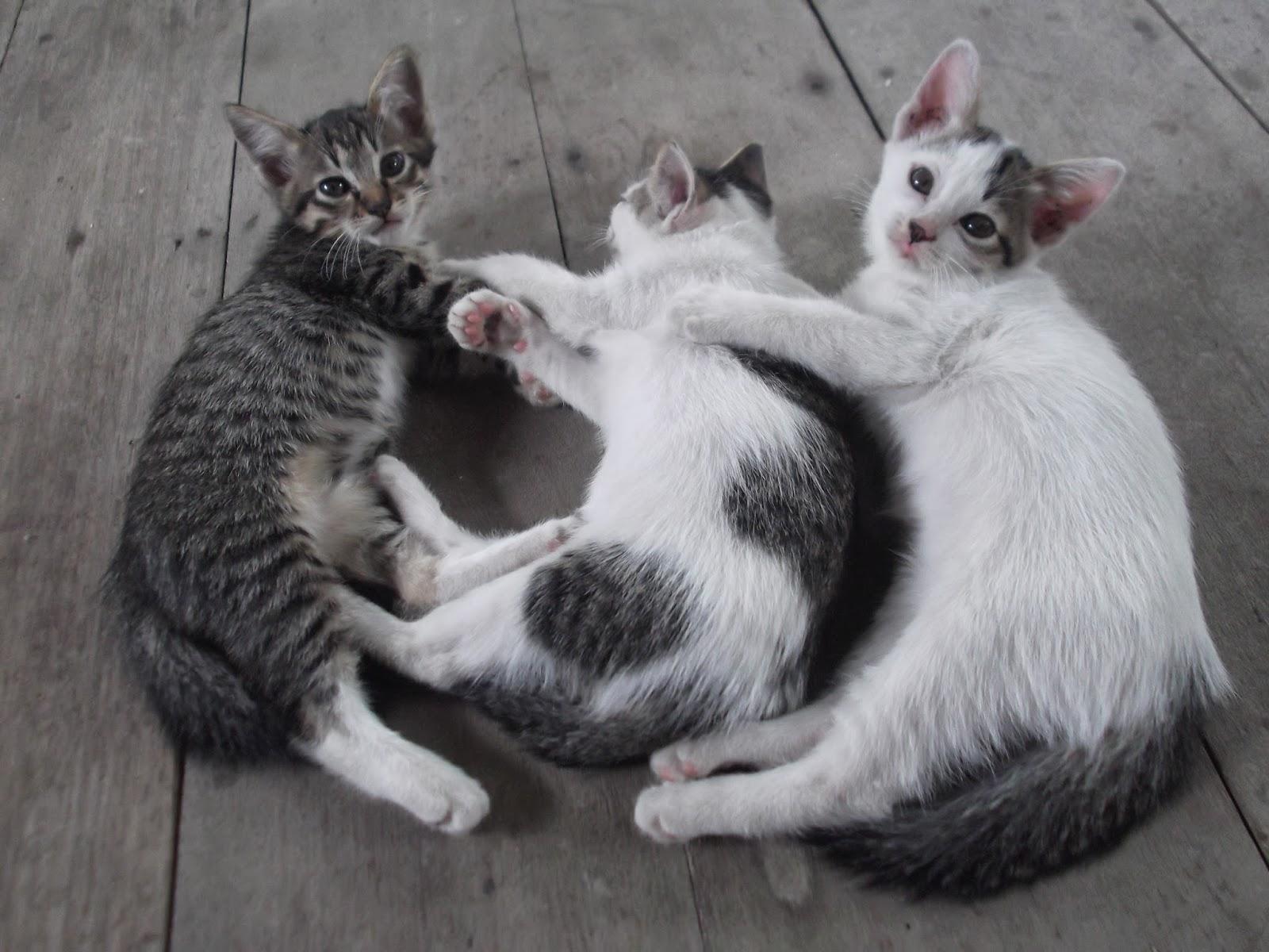 3 ekor anak kucing