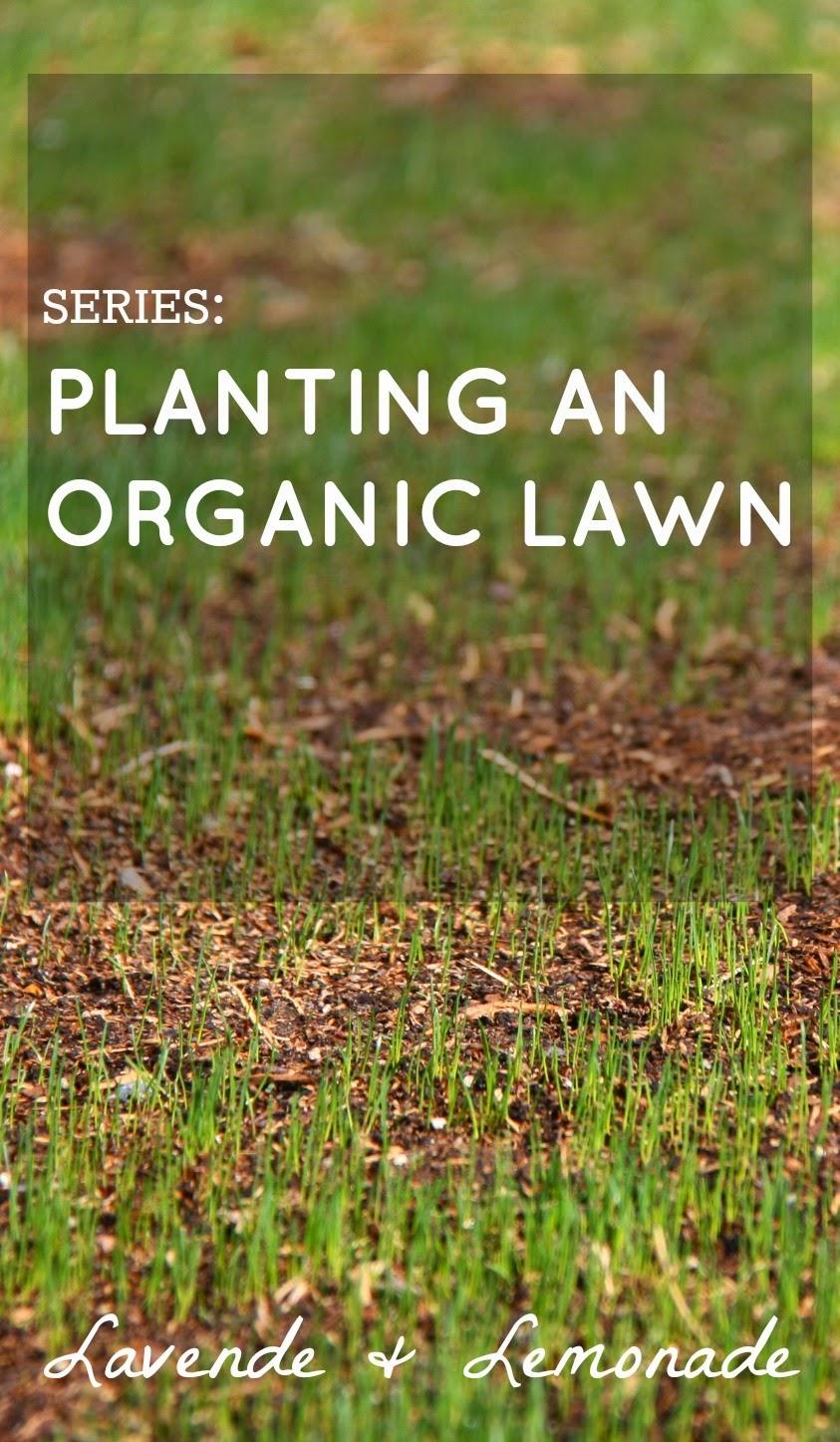 Planting an Organic Lawn - Series Begins - Lavende&Lemonade