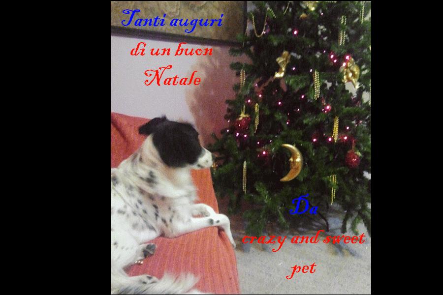 Cane-albero-di-natale