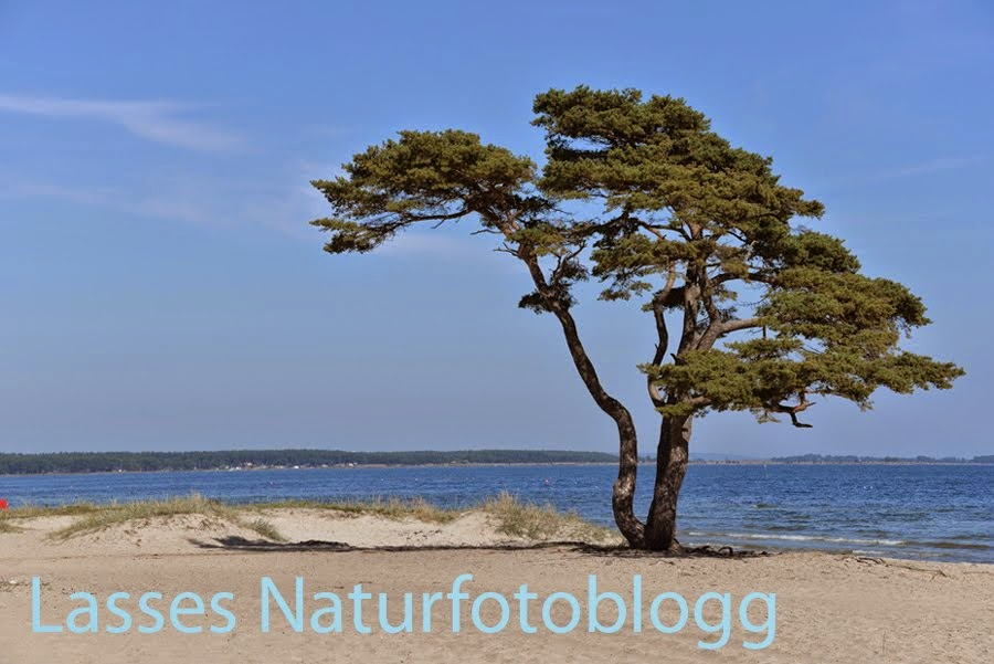 Lasses naturfotoblogg
