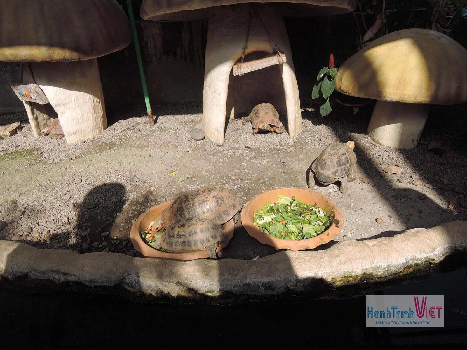 Tham quan sở thú ở Chiêng Mai