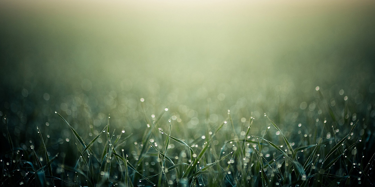 Grass 300+ Muhteşem HD Twitter Kapak Fotoğrafları