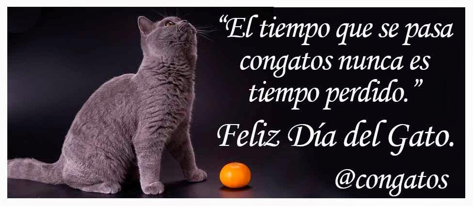 Día del Gato 2015