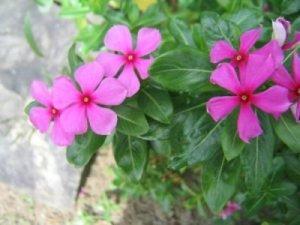 Bila gambar bersuara: Gambar bunga-bunga liar untuk dijadikan corak ...