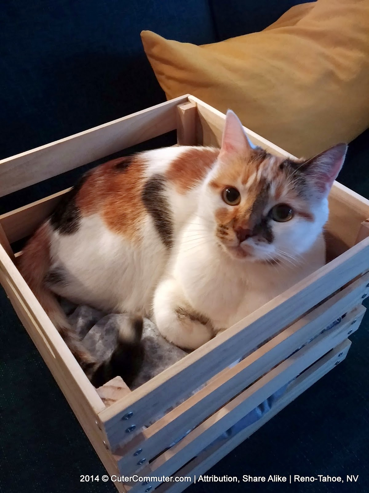cat in custom wood crate