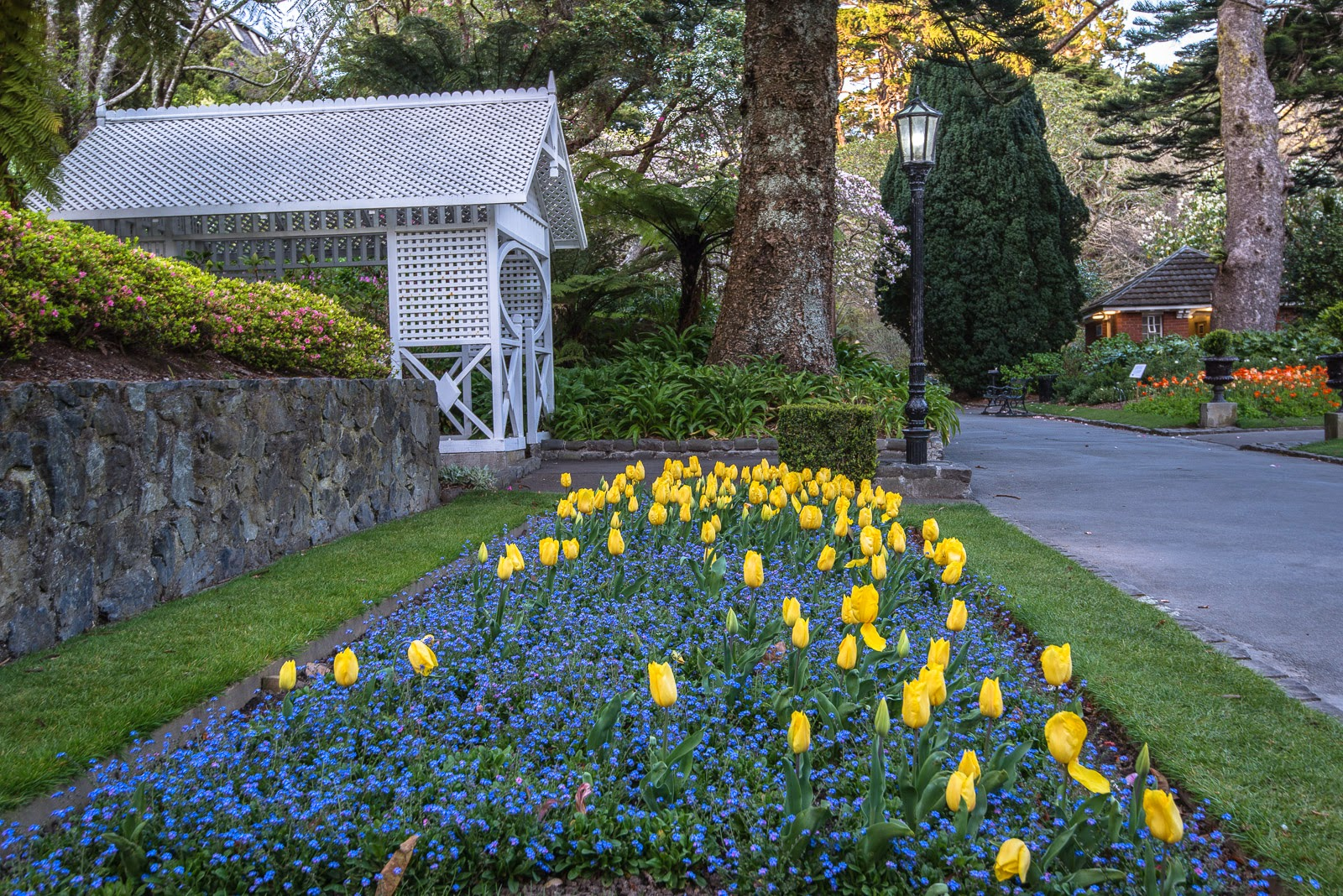 yellow tulips in bloom with gatehouse and lamppost