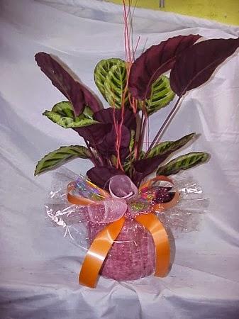 Manualidades para hacer en casa ideas para regalar plantas - Que regalar para una casa ...
