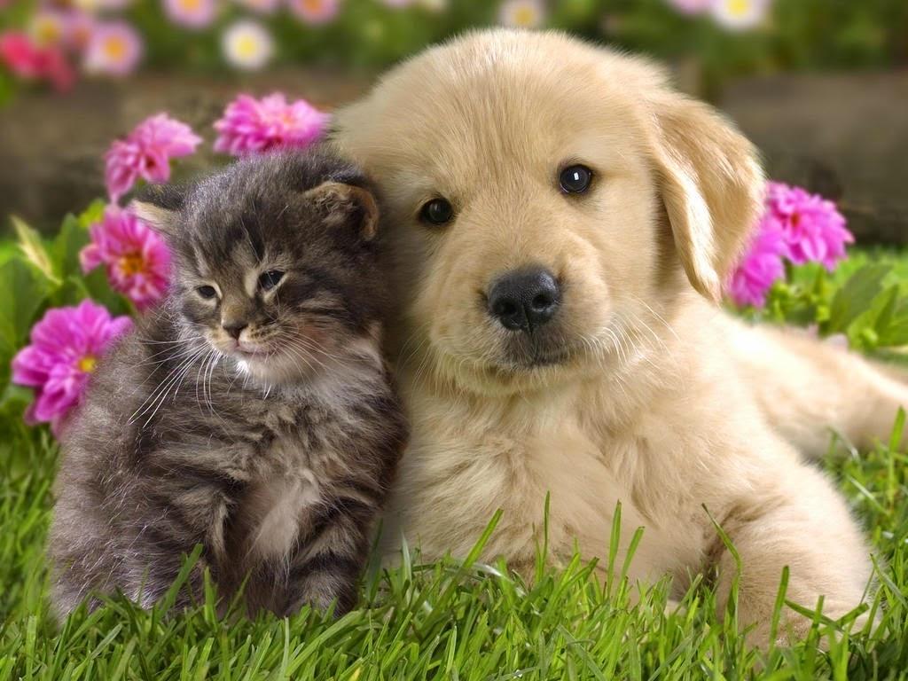 Đoán tính cách con người qua thú cưng