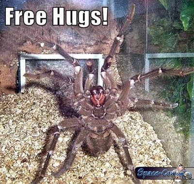 funny animals spider picture