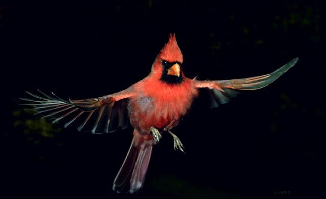 நான் பார்த்து ரசித்த புகைப்படங்கள் சில.... - Page 2 Flying+Birds+%25288%2529