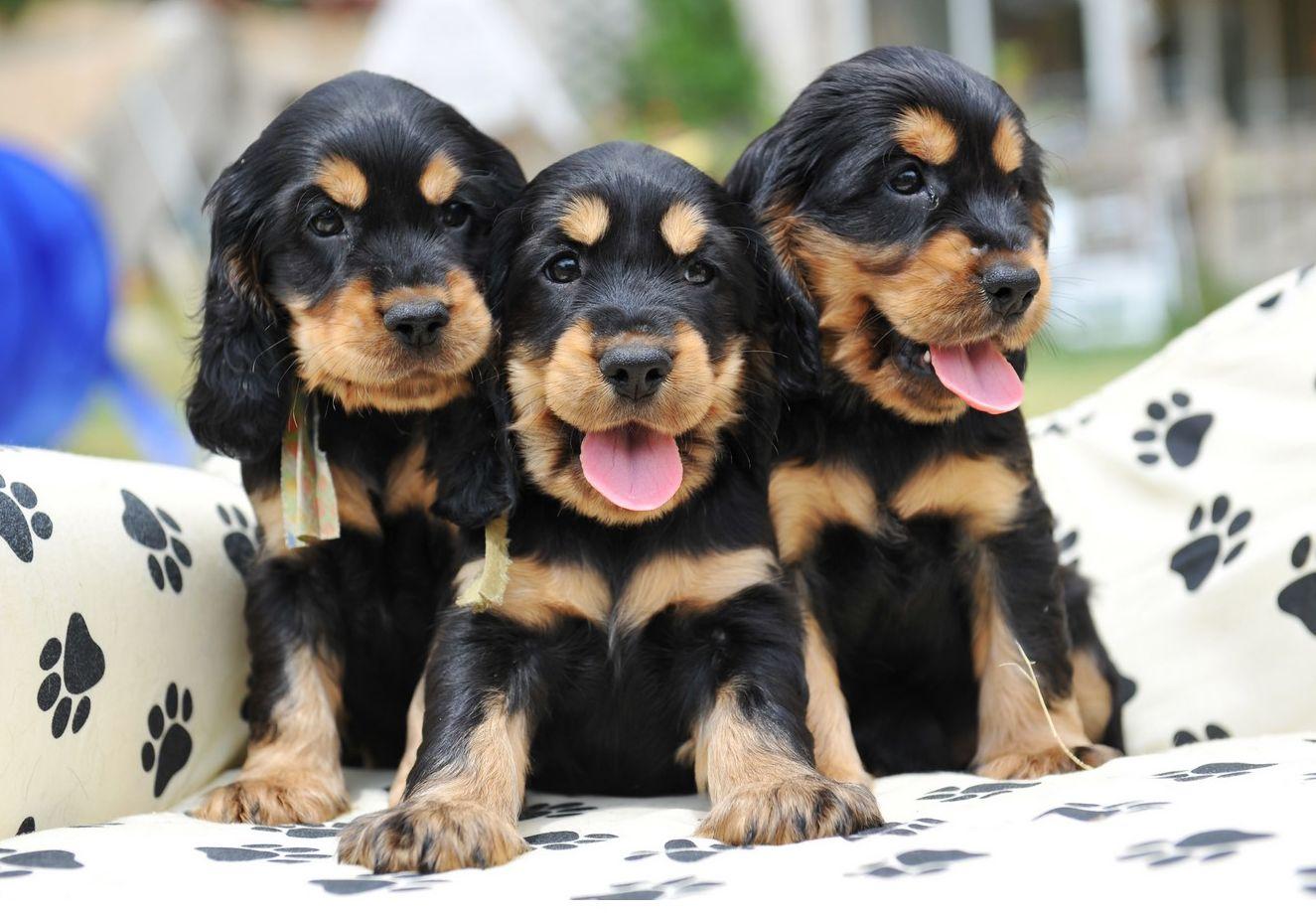 Ver fotos de perritos cachorros 85