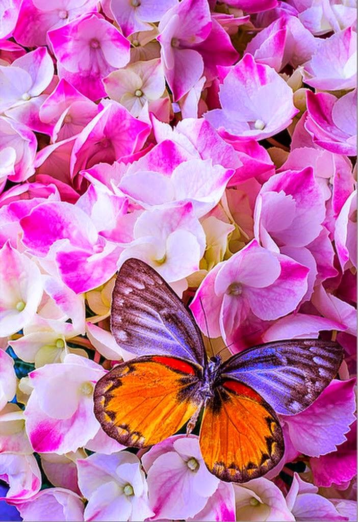 flores-y-mariposas-amarillas-fotos