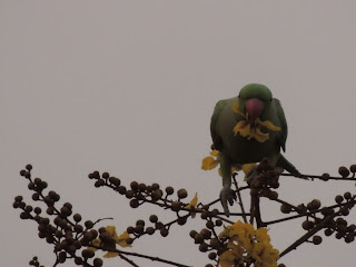 Flowers, Birds & Shadow play :)