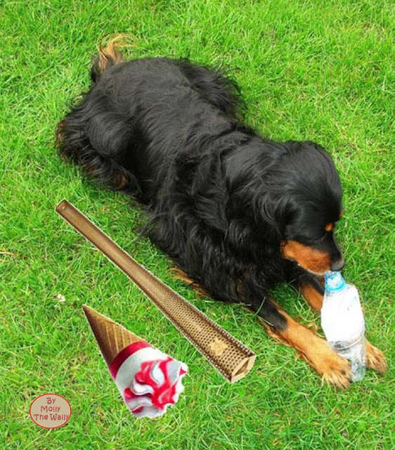 Molly The Wally and the Olympic torch.