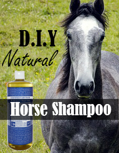 DIY Natural Horse Shampoo Recipe