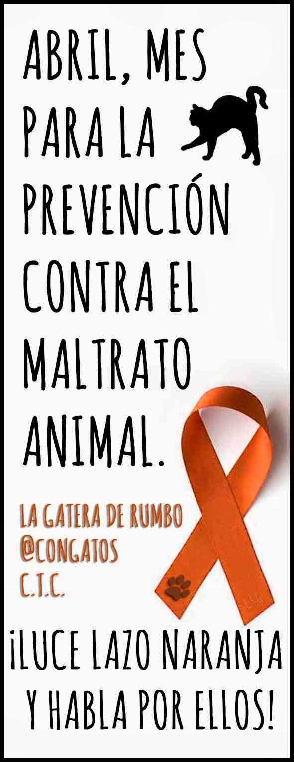 Lazo naranja para la prevención contra el maltrato animal. La Gatera de Rumbo
