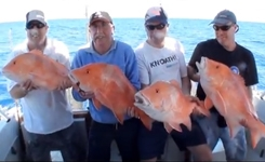 Big Red Emperor Fishing Madness!! Deep Sea fishing the Great Barrier Reef!!