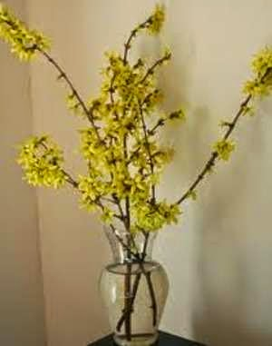 How to Force Spring Blooming Branches Into Early Indoor Color