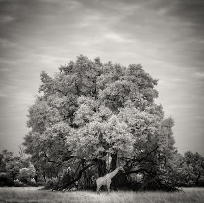 2011 International Photography Award Winners Seen On www.coolpicturegallery.us