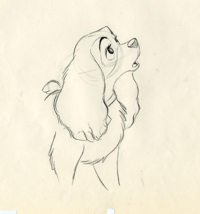 disney lady and the tramp animation drawing of lady 1955 disney
