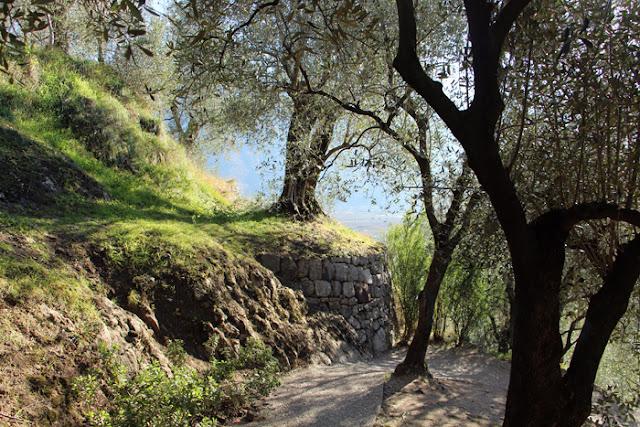 Abstieg über den Olivenhain nach Arco