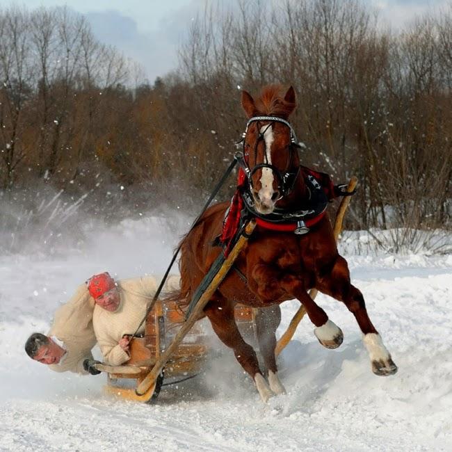 Через секунду после того, как лошадь поняла, что в санях — не Дед Мороз со Снегурочкой