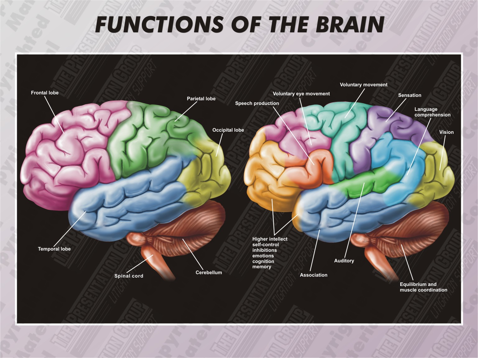 the parts and functions of the brain Read chapter 2 major structures and functions of the brain: the brainthere is no other part of the human anatomy that is so intriguing how does it de.