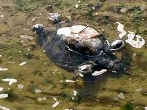 Tartaruga foi encontrada morta em esgoto que desemboca na praia de Amaralina (Foto: Reprodução/TV Bahia)