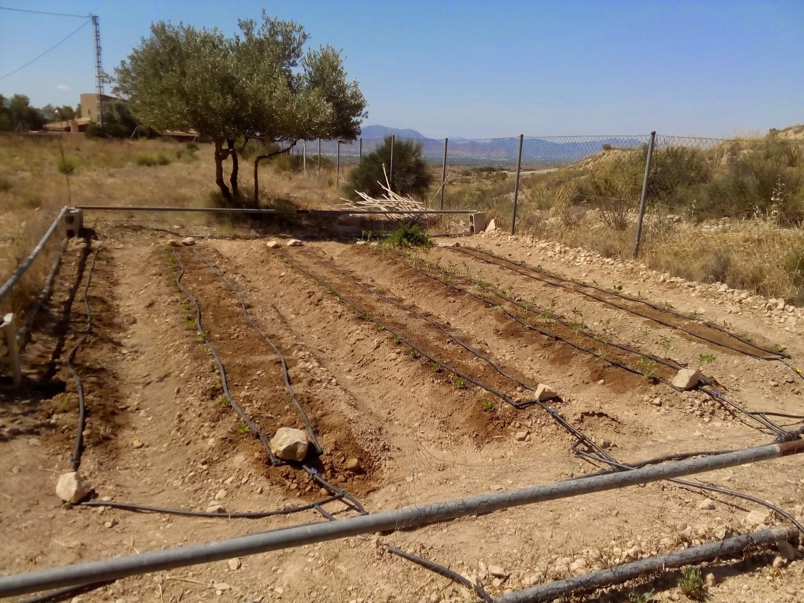 Mi huerto ecol gico todo vuelve a empezar temporada de Rotaciones de cultivos ecologicos