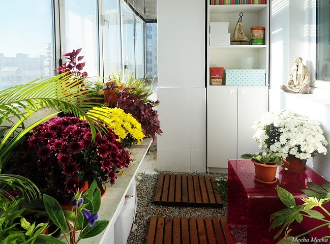 Meeha meeha winter balcony with mums for Balcony zen garden ideas