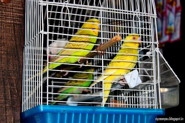 Parrot, love parrots