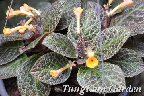 hoa ngoại thất sân vườn đẹp - hoa cho thiết kế sân vườn nhiệt đới