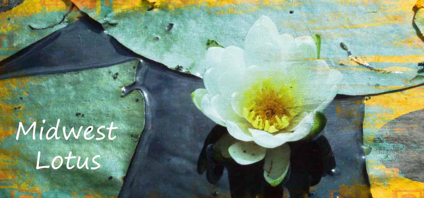midwest lotus