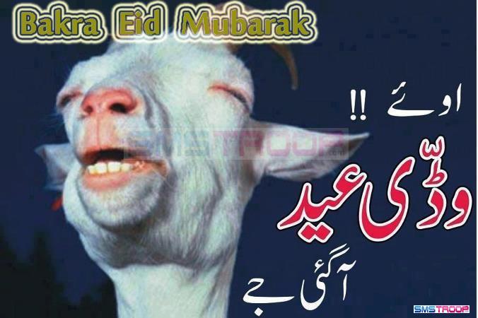 Best Bakra Eid Eid Al-Fitr Greeting - Funny%2BBakra%2BFace%2BGreetings%2Bon%2BBakra%2BEid%2B2013-756137  You Should Have_88117 .jpg