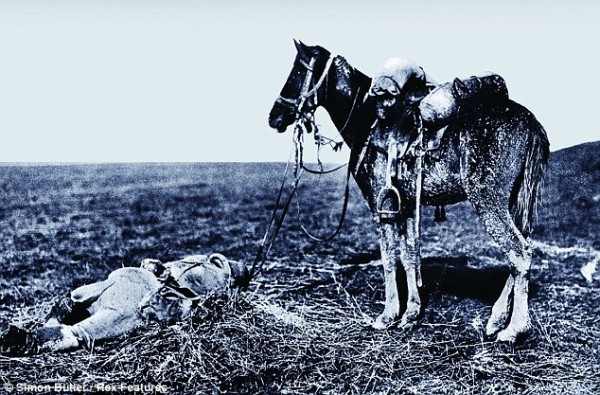 Emotional Pictures Of Soldiers Saying 'Goodbye' To Their Sacrificed Horses During The First World War