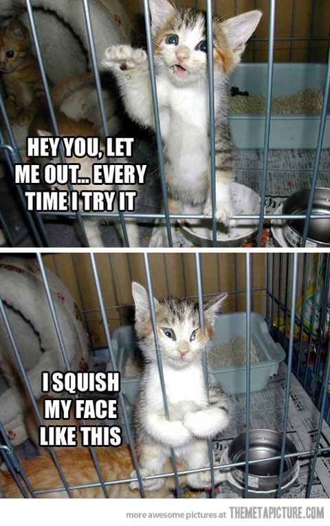 Funny Cat Face Meme : Funny pictures facebook photos jokes