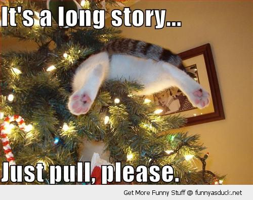 funny christmas photo: