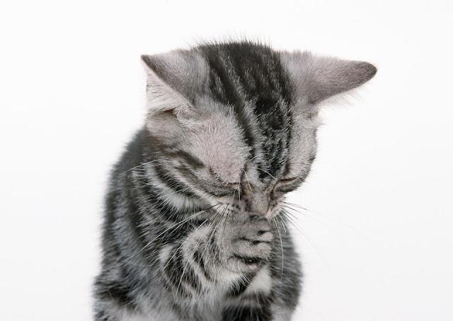 Cute funny cat Cat Say's : Please share Cutipedia with friends