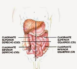 Cavidades corporales for En k parte del cuerpo estan los rinones