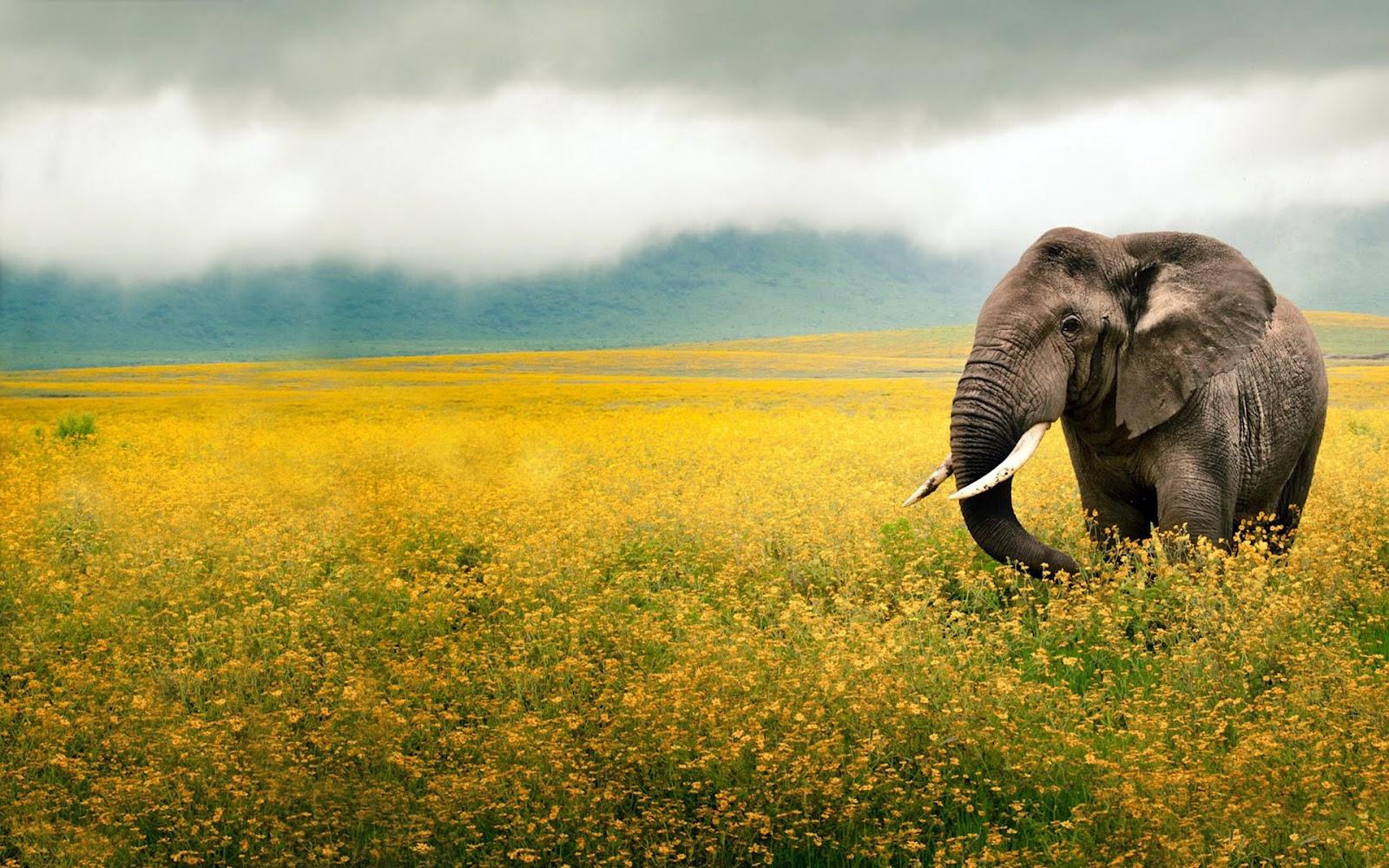[Imagen: Elefante-en-la-Selva-Fondos-de-Pantalla-de-Animales.jpg]