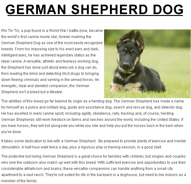 You Must To Train German Shepherd Puppy Training