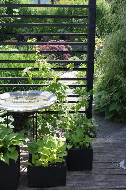 Godastunder & Tokiga Ideèr: Trädgård full av vatten.....