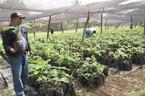 Ecologia viveros for Produccion de plantas en vivero pdf