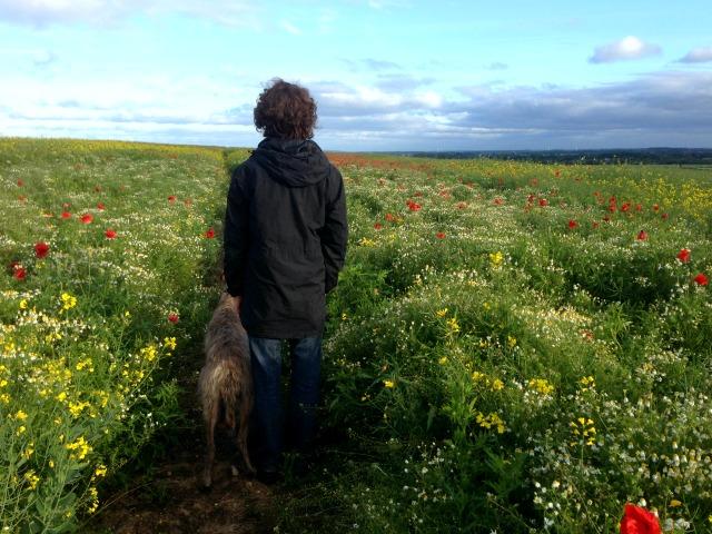 David MacKarill walking lurcher dog