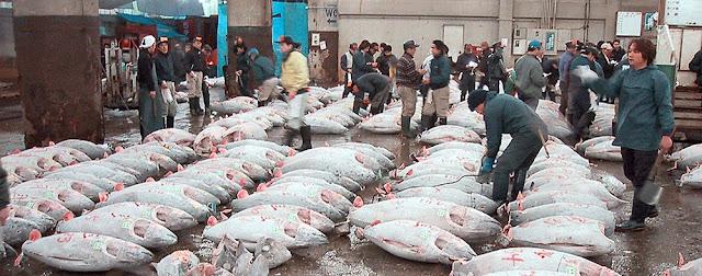 La subasta del atún en el Mercado de Tsukjii en Tokio