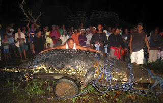 World's Biggest Crocodile Caught in the Philippines