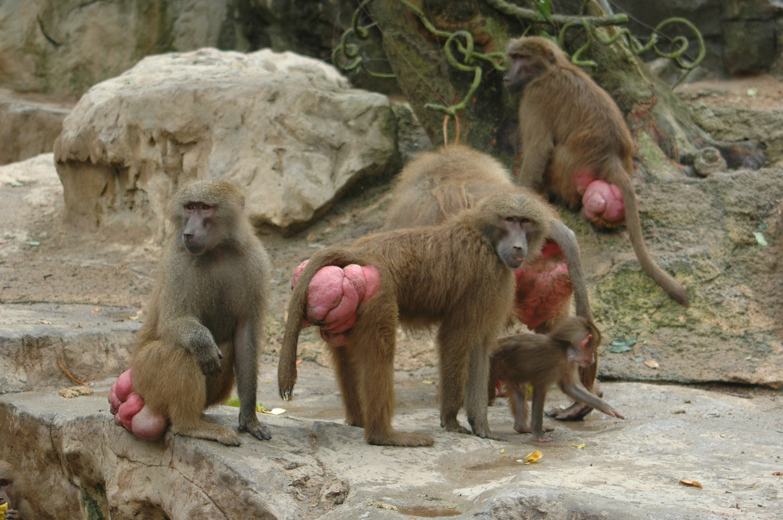 A Baboons But Welcome To Fun2...
